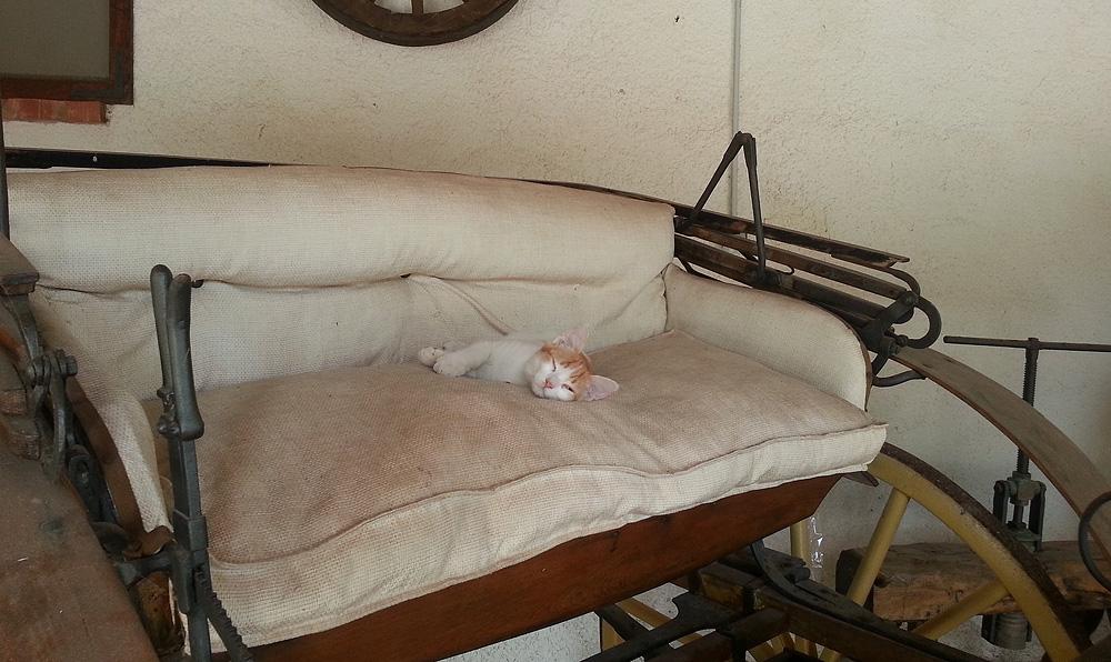 Arancino op een van de oude karren van de tenuta