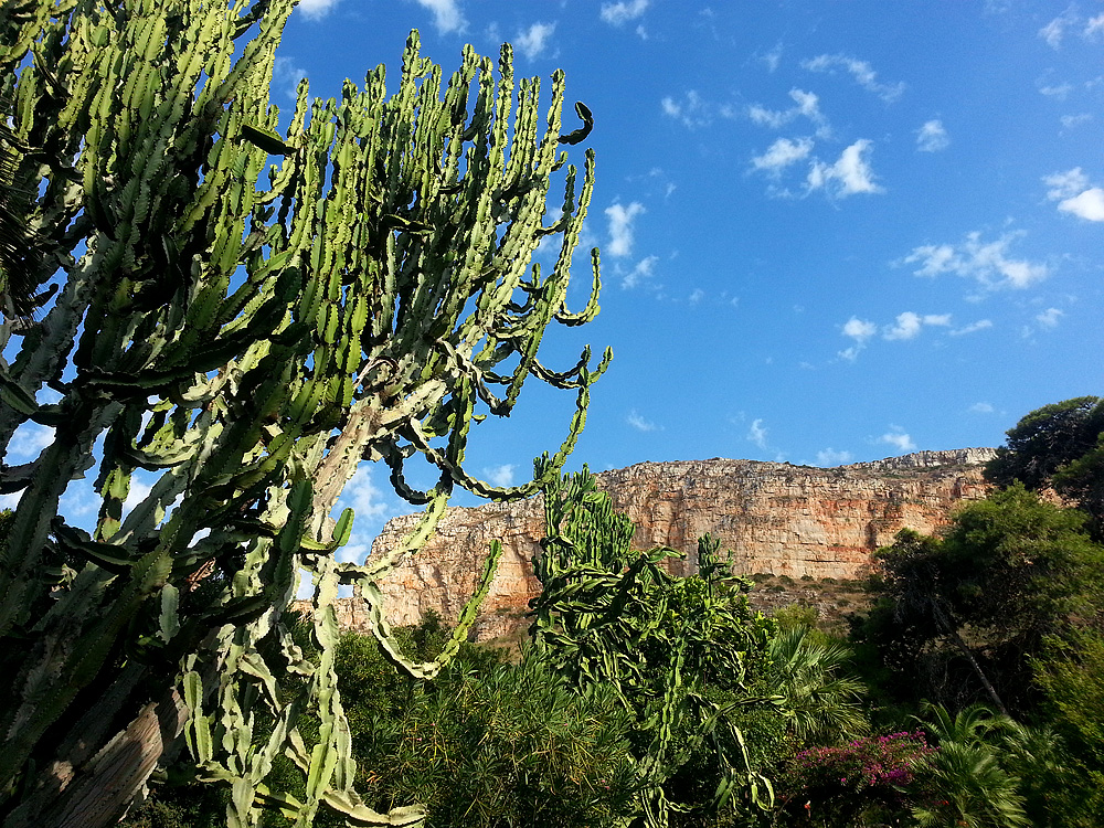 Een cactus van meer dan 100 jaar oud in de tuin van de tenuta