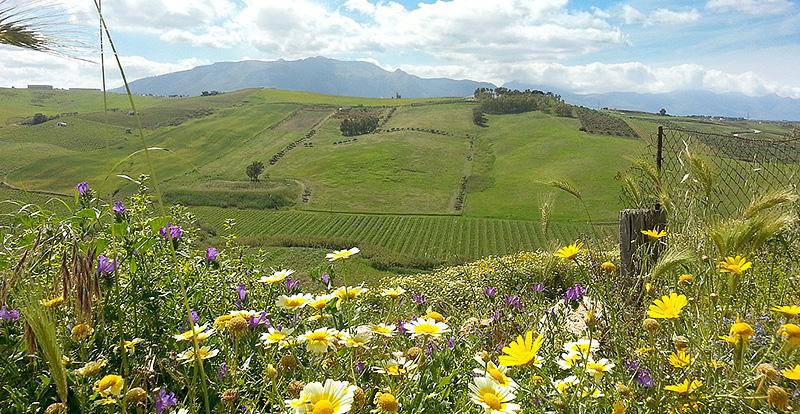 Het heuvelachtige landschap in de buurt van Alcamo