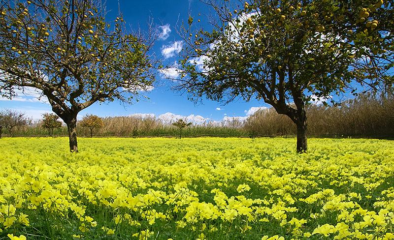 Sicily in the springtim