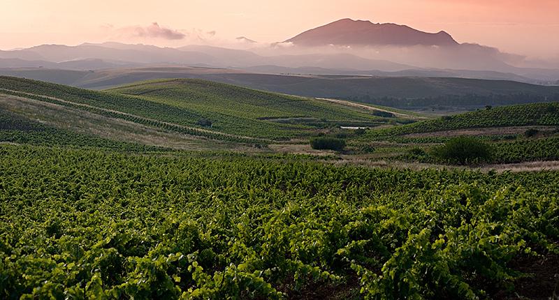 Wijngaarden in het avondlicht