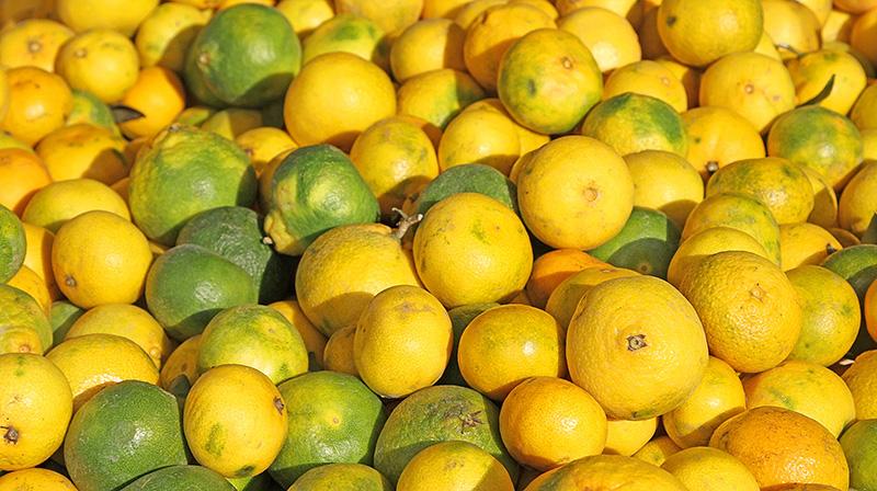 Lemons at the market of Palermo