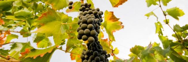 Wijn proeven op Sicilië