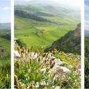 Kleuren van Sicilië: groen