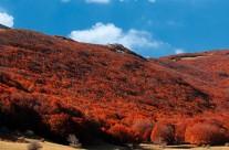 Een herfstbos op Sicilië