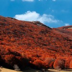 An autumn wood on Mount Etna